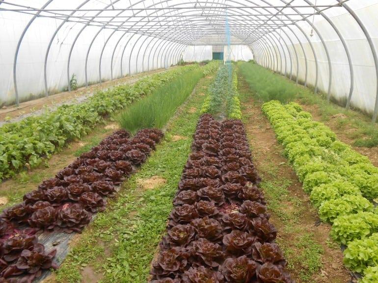 Le jardin de pr lude paniers bio finist re for Vide jardin finistere 2016