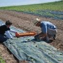 13-plantation-salade.jpg