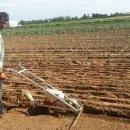 savez-vous-planter-les-choux-ferme