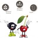 fruits de saison Indre et Loire