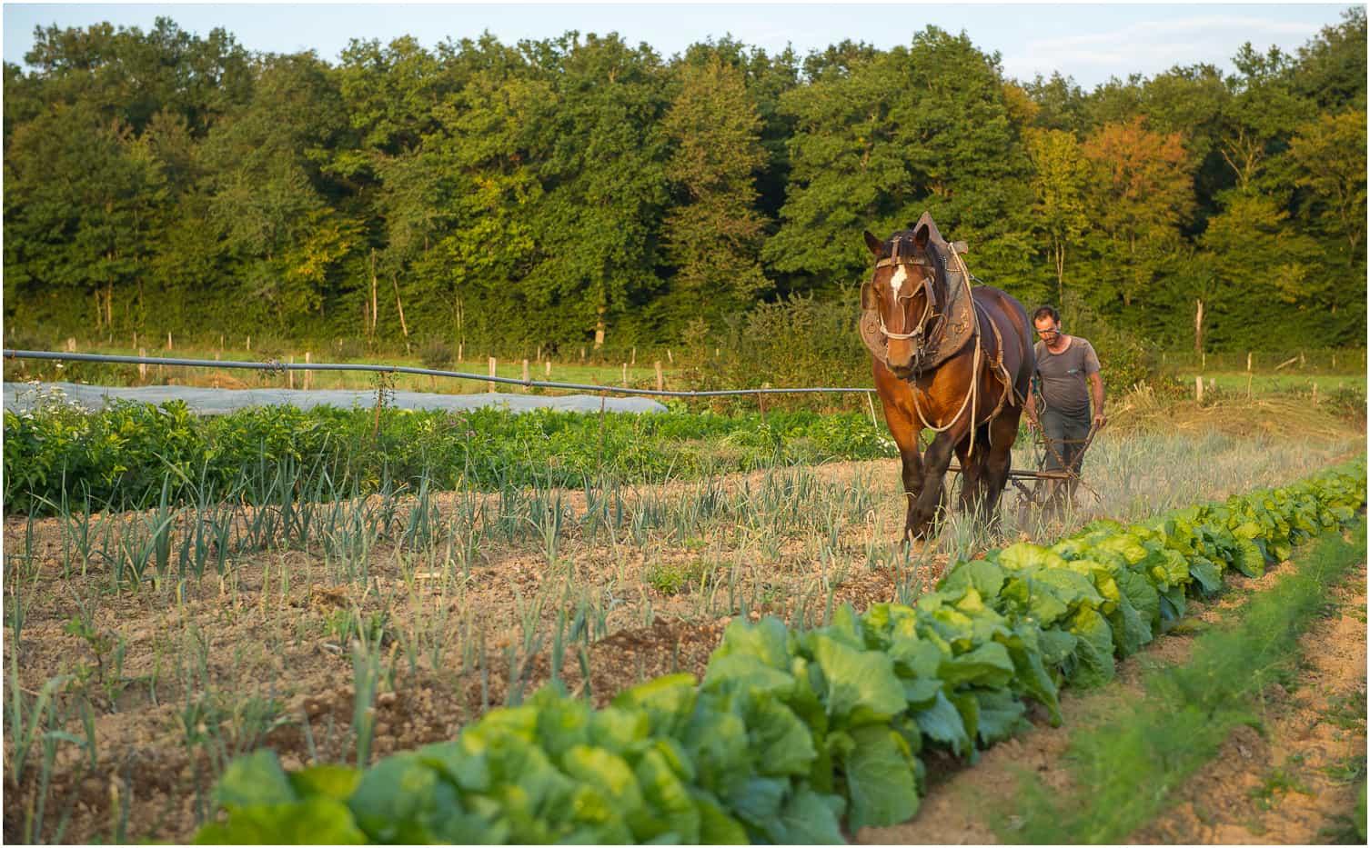 le jardin du coin pouilloux panier de l gumes bios de saison cultiv s avec des chevaux de trait. Black Bedroom Furniture Sets. Home Design Ideas