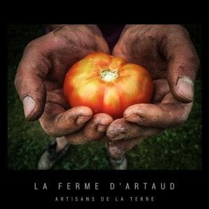 Premiere_tomate