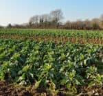 ferme-legumes-bio-450x232