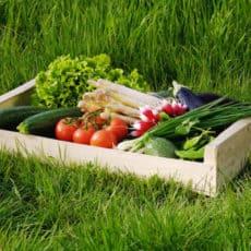 paniers-legumes-bio-550x400