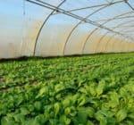 producteur-fruits-legumes-bio-450x300