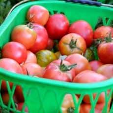 jardins-de-cocagne-chalezeule-legume-bio-besancon.jpg